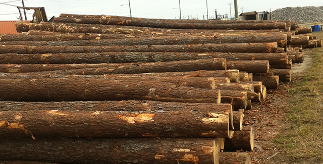 Contact Garley Forest Products Southern Yellow Pine